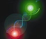 Double-helix strand with red and green lense flares.